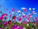 【合唱曲】 I Believe In Springtime 【John Rutter】