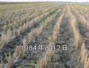 谷山浩子のオールナイトニッポン 1984年08月02日