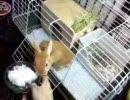 【ウサギ動画】初雪とうさぎ