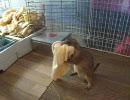 初めての巣作り ~ プレーリードッグ