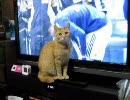 10.02.02 テレビのボールが気になる猫