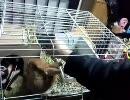 【うさぎ動画】回るウサギ