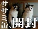 【ひげ猫一家】ササミ缶を・・・喰ってる・・・?!【2月22日22時23分】