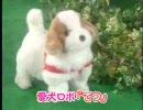 愛犬ロボ「クズ」