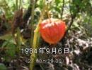 谷山浩子のオールナイトニッポン 1984年09月06日