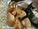 子猫保護しました vol2