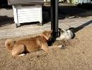 飼い犬のナナと捨て猫のちぃ(現在は飼い猫)が遊んでいます。